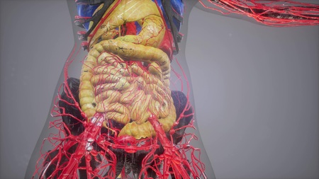 human anatomy illustration with all organs