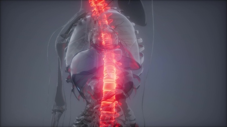 Hurt Spine. Male Backbone. Backache, Headache - Vertebrae Pain Imagens