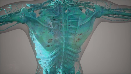Complete close-up view of the Skeletal System with transparent body