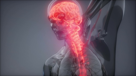 backache in backbone. science anatomy scan of human spine bones glowing Imagens