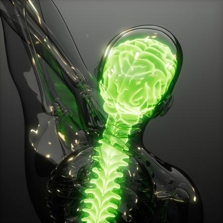 science anatomy scan of human brain glowing Stock Photo - 117856182