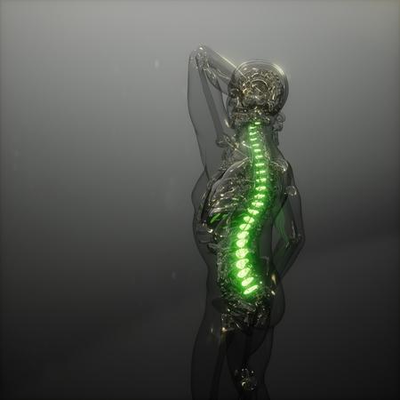 backache in backbone. science anatomy scan of human spine bones glowing Stock Photo