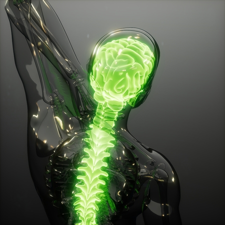 science anatomy scan of human brain glowing Stock Photo - 118775435