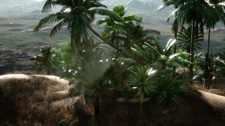 Plantation of palm trees at Ein Gedi in the Dead Sea area, Israel.