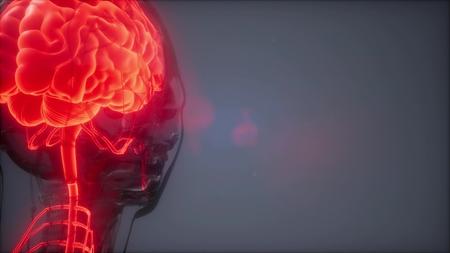 science anatomy scan of human brain glowing Stock Photo