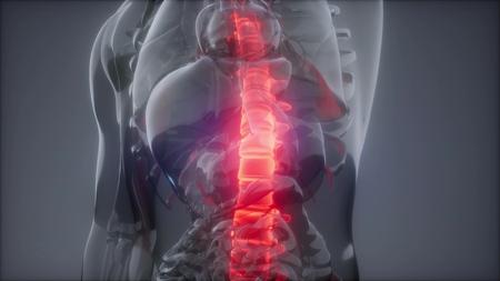 ból pleców w kręgosłupie. nauka anatomia skan świecących kości kręgosłupa Zdjęcie Seryjne