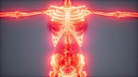 medical science footage of human skeleton bones