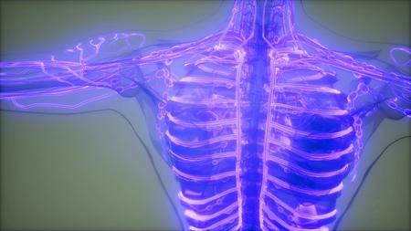 science anatomy scan of human blood vessels Фото со стока