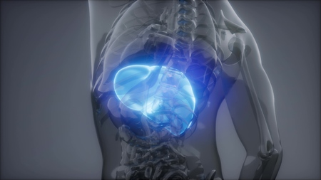 science anatomy scan of human liver glowing Stockfoto