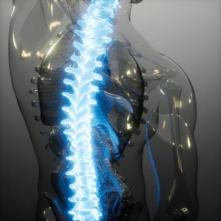 backache in backbone. science anatomy scan of human spine bones glowing Imagens - 120557243