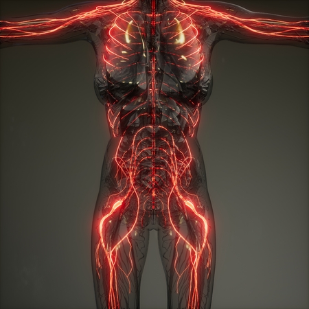 Human Neurology System Radiology Exam