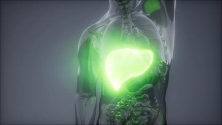 science anatomy scan of human liver glowing Фото со стока