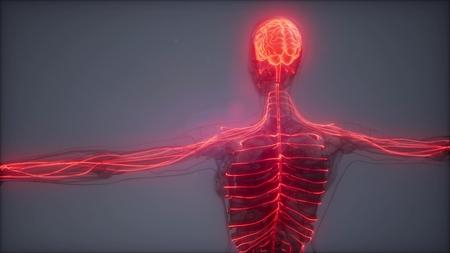 science anatomy scan of human brain glowing Stockfoto