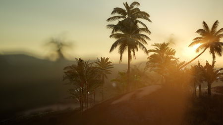 view of the palm trees in fog at sunset