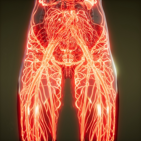 science anatomy scan of human blood vessels 스톡 콘텐츠