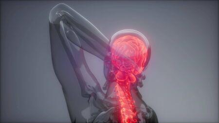 backache in backbone. science anatomy scan of human spine bones glowing Archivio Fotografico