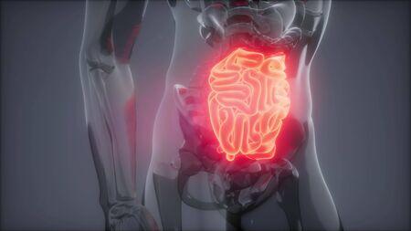 science anatomy scan of human small intestine glowing