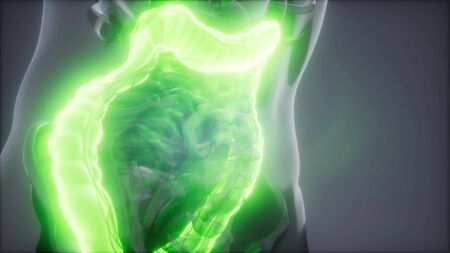 science anatomy scan of human colon glowing Imagens