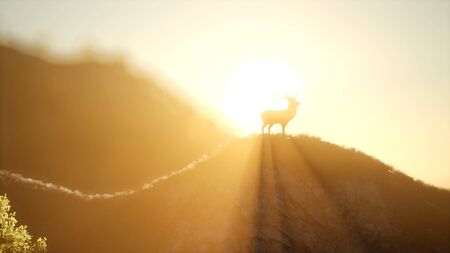 deer male in mountain forest at sunset