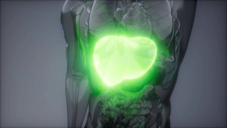 science anatomy scan of human liver glowing Stock Photo