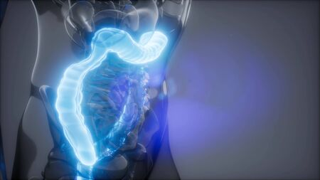science anatomy scan of human colon glowing Stock Photo
