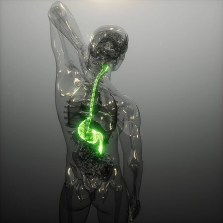 science anatomy scan of human stomach glowing Stock Photo