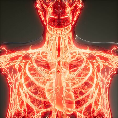 science anatomy scan of human blood vessels Banco de Imagens