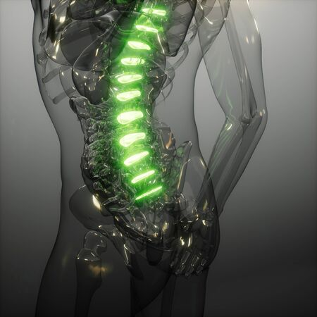backache in backbone. science anatomy scan of human spine bones glowing Stock Photo