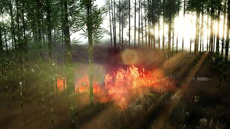 Wind blowing on a flaming bamboo trees during a forest fire Stockfoto
