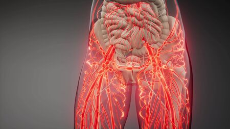 science anatomy scan of human blood vessels Banque d'images