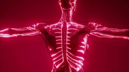 scintigraphie de l'anatomie des vaisseaux sanguins humains
