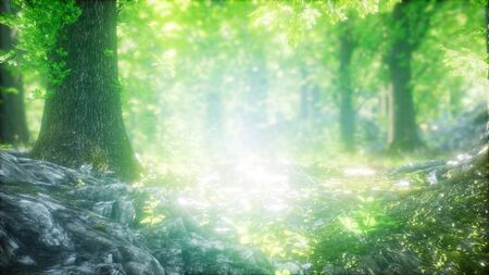 forest of beech trees illuminated by sunbeams through fog