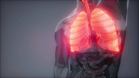 science anatomy scan of human lungs glowing