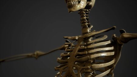 bones of the Human skeleton