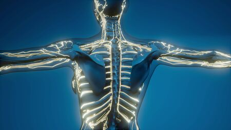 science anatomy scan of human blood vessels Stock Photo