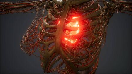 CG Animation Of A Sick Human Heart Stock Photo