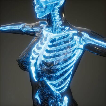 medical science image of human skeleton bones Stock Photo - 131302079