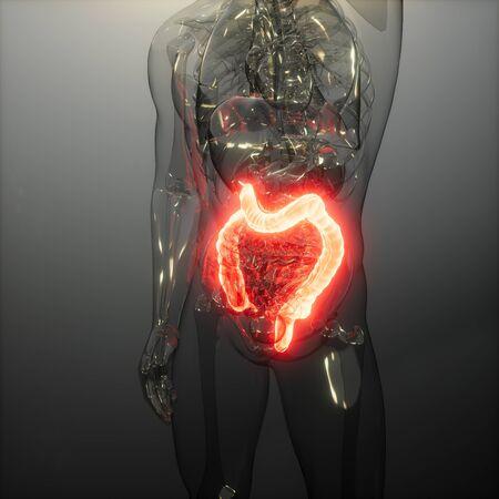 science anatomy scan of human colon glowing Stockfoto