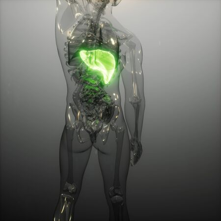 science anatomy scan of human liver glowing Stock Photo - 131302185