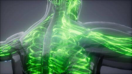 science anatomy scan of human blood vessels Stok Fotoğraf