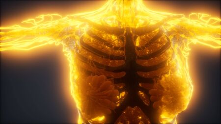 Colorful Human Body animation showing bones and organs