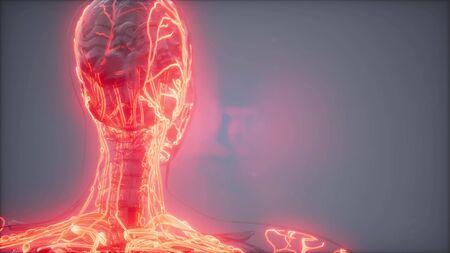 science anatomy scan of human blood vessels Stockfoto