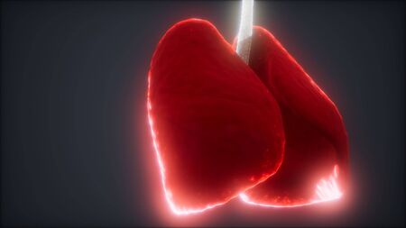 loop 3d rendered medically accurate animation of the human lung Stockfoto
