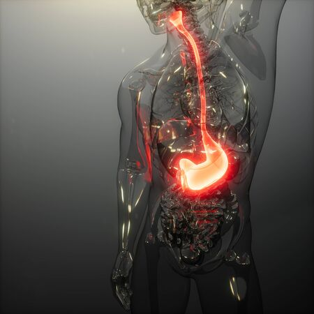 science anatomy scan of human stomach glowing 写真素材