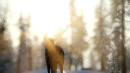 proud noble deer male in winter snow forest in mountains