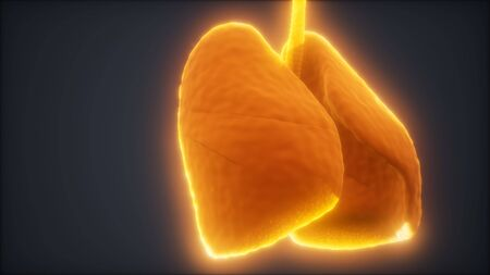 loop 3d rendered medically accurate animation of the human lung Banque d'images