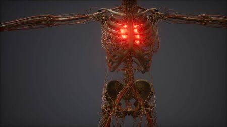 CG Animation Of A Sick Human Heart Archivio Fotografico - 134949837