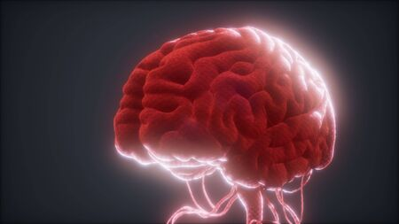 animiertes Modell des menschlichen Gehirns Standard-Bild