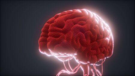 modelo animado del cerebro humano Foto de archivo