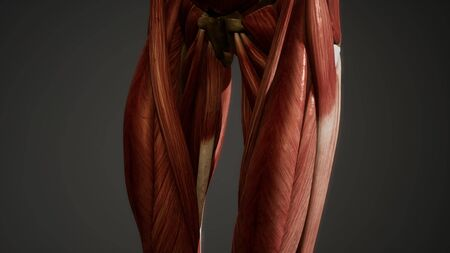 Muscular System of human body animation Stock Photo